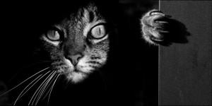 эзотерика и животные