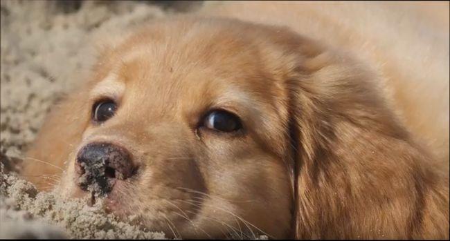 Желтая Земляная Собака – символ 2018 года