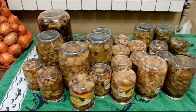 грибы больше всего подходят для консервации,маринования на зиму