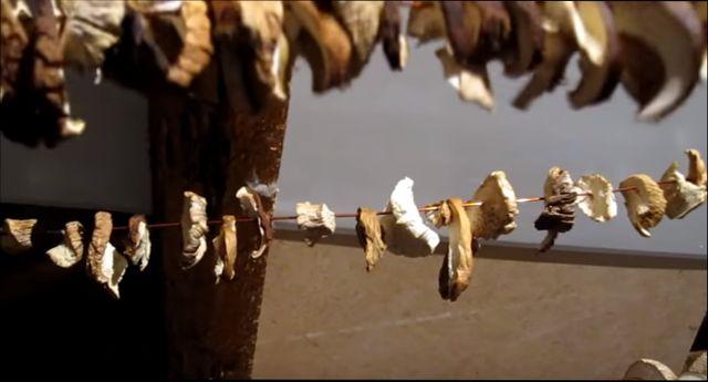 Как засушить грибы на зиму