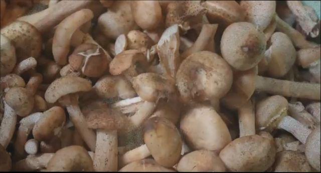 Маринованные опята - самые вкусные рецепты приготовления на зиму