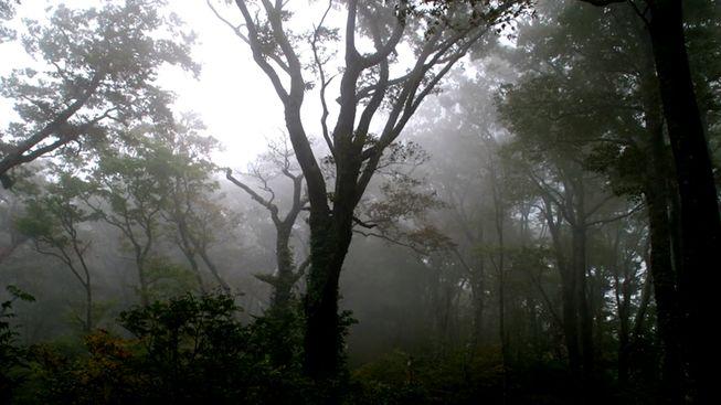 Что может подстерегать человека в лесу в грибной сезон