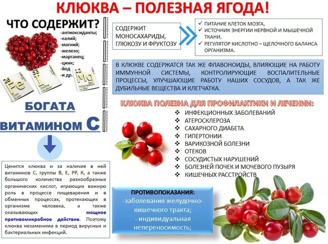 Клюквы питательные свойства