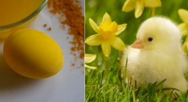 Яйца  похожие на цыплят