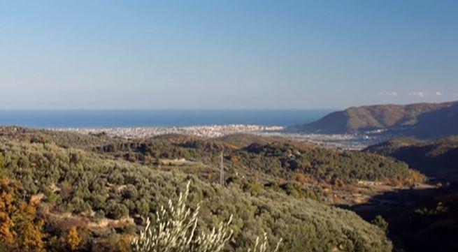 когда и где выросло первое оливковое дерево