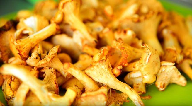 Рецепты с грибами лисичками вкусные блюда из лесных грибов